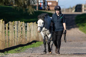Dapple grey pony walking along track with groom on a sunny day at Penny Farm