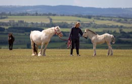 Four ponies of varying colours and sizes grazing in a paddock at the top of a hill