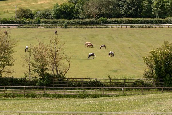 a series of paddocks with horses